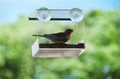 window bird feeder red earth naturals