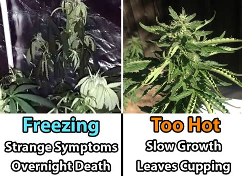 cannabis room temperature cannabis temperature tutorial how to heat in the grow room grow easy