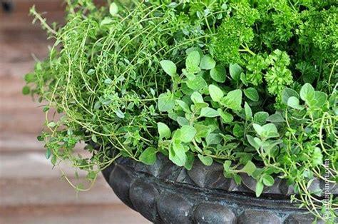 fall herb garden my fall herb garden porch style add a pinch