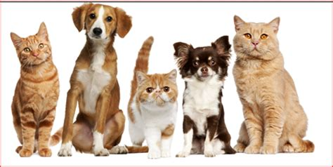 free puppy vaccinations near me animal center veterinary pet hospital west covina ca 91790 low cost vaccines
