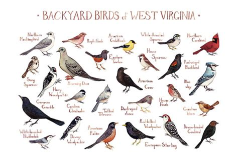 backyard birds of virginia west virginia backyard birds field guide art print