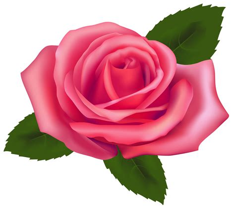 rosa clipart beautiful clip cliparts