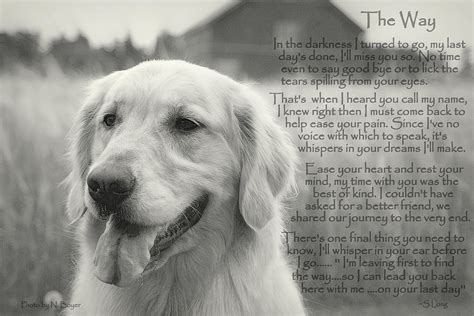 golden retrievals poem golden retriever the way photograph by sue