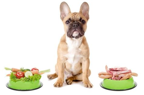 what to serve with dogs foods your dogs can and can t eat thehappypooch
