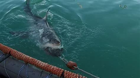gabbia squali immersione in gabbia per vedere il grande squalo bianco