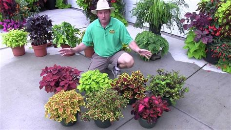 foliage plants part  shade plants youtube