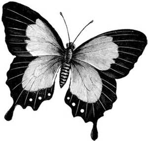butterfly clipart etc