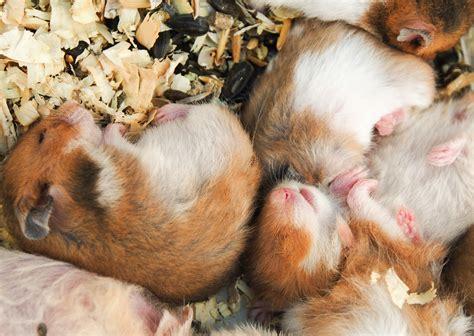 Sho Kucing Yang Murah ini nih 4 hewan peliharaan yang murah dan mudah dipelihara