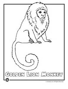 coloring pages endangered animals rainforest coloring sheets coloring pages to print 891
