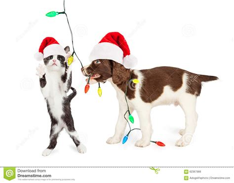 lighted santa claus hats cute kitten and puppy playing with christmas lights stock