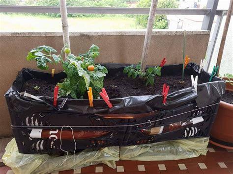 vasi per balcone orto sul balcone dimensioni dei vasi per ortaggi