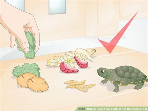 ways  feed  turtle    refusing  eat wikihow