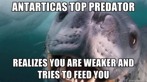 Happy Feet Meme - leopard seal memes