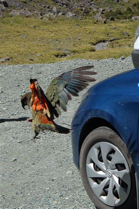 2266220411 le plus bel endroit du le fiordland plus bel endroit du pays