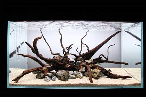 Aquarium Ohne Pflanzen Einrichten 6848 by Ist Ein Aquarium Ohne Pflanzen M 246 Glich Aquarianer Tipps