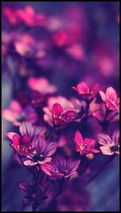 imagenes para celular flores flores hd para fondo de celular fondos pinterest