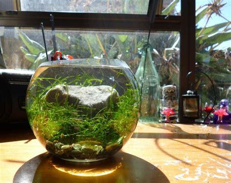 aquarium bowl design simple java moss bowl aquascapes pinterest bowls