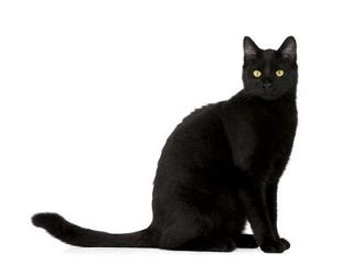 Black Cats Superition - Lucky and Unlucky Black Cat