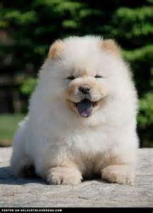 chow chow colors the world s catalog of ideas