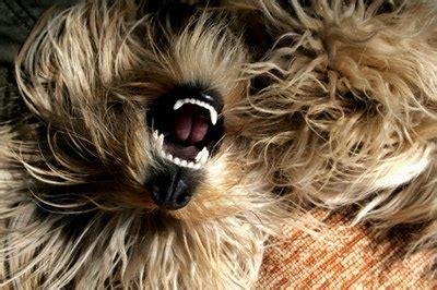 determine  age   dog   teeth pets