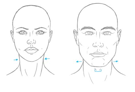 jaw line types the differences between male and female portraits