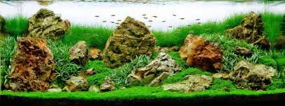 Aquascaping Live Rock Ideas An American Style Iwagumi Planted Aquarium Live Planted