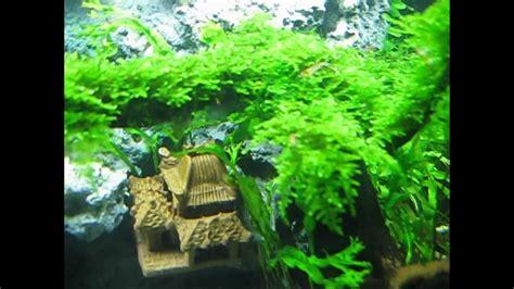 aquascape tree aquascape taiwan moss tree my beauty aqua bonsai youtube