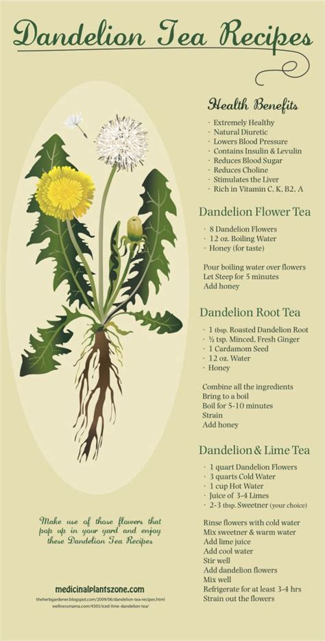 Yogi Roasted Dandelion Spice Detox Tea Benefits by Best 25 Dandelion Tea Detox Ideas On