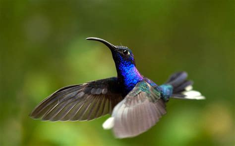 hummingbird hd wallpapers hummingbirds hd images hd