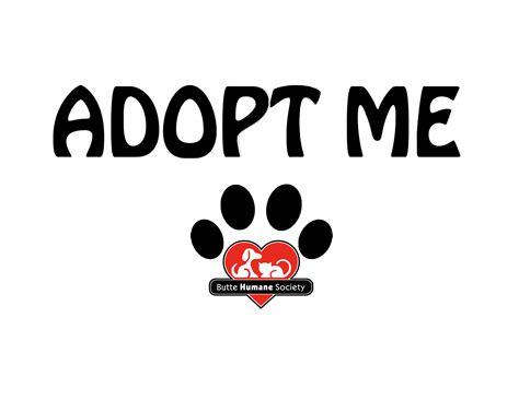 where to adopt a near me humane society adopt me vests mangobeans