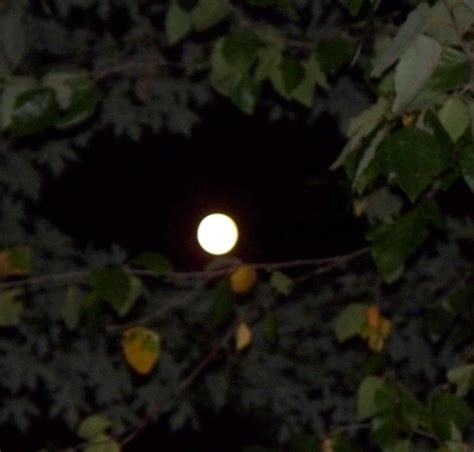 the light of the moon planting by the light of the moon gardenorg