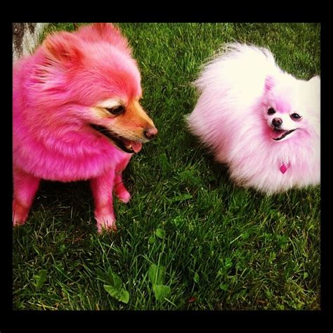 jeffree dogs jeffree s dogs and pic and