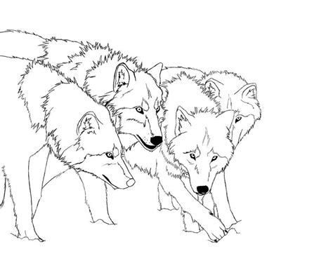 coloring page gray wolf free printable wolf coloring pages for kids free