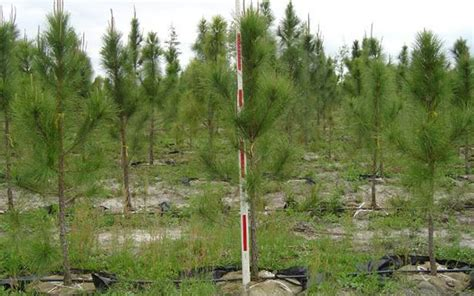 Landscape Supply Fort Myers Tree Nursery Fort Myers