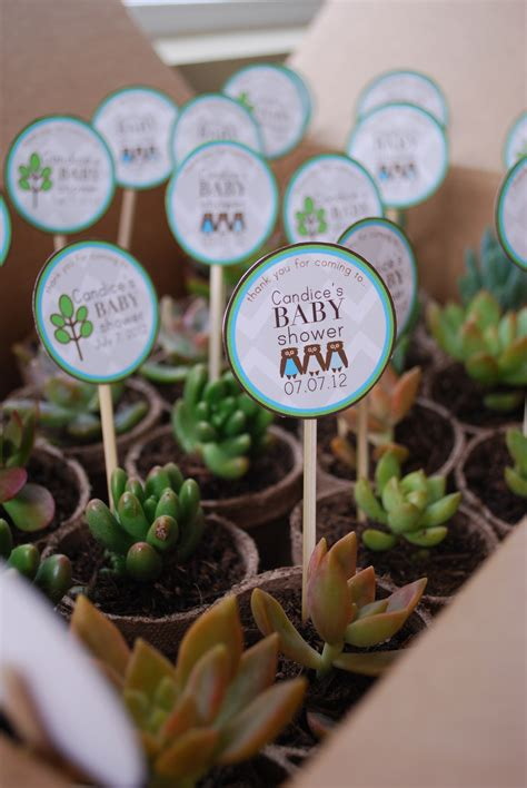 where to buy baby shower favors a succulent shower favor these favors were so and so