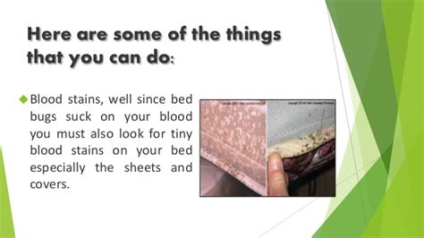 do bed bugs suck blood how to identify atlanta residential home bed bug infestations