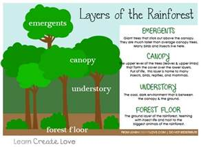 layers of rainforest worksheet