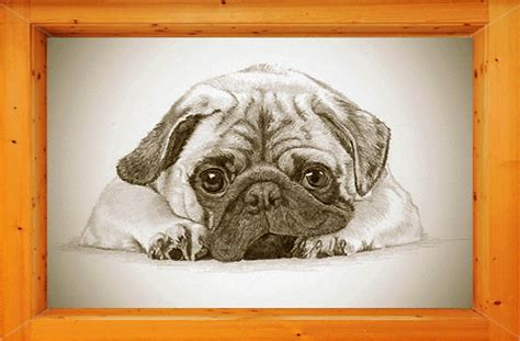 living with a pug pug valley kennels