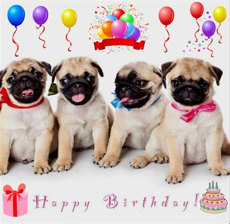 happy birthday pug images happy birthday pug meme search pugs pug meme happy