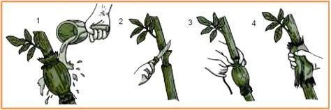 Inti Sari Rpul Sd Kls456 vegetatif tanaman biologi sd inti sari biologi