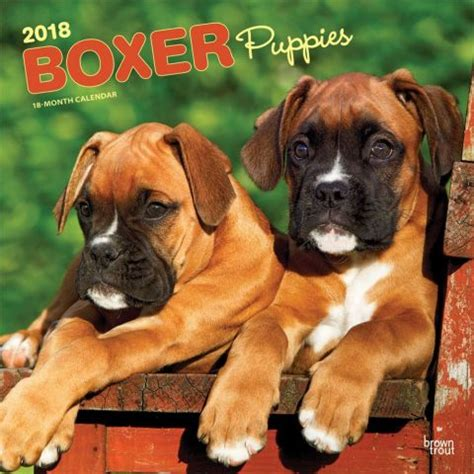 boxer desk calendar boxer puppies wall calendar 2018 browntrout calendars