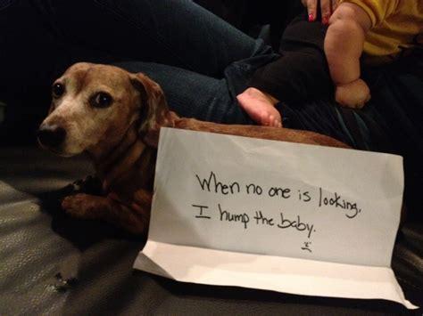puppy shaming shaming babygaga