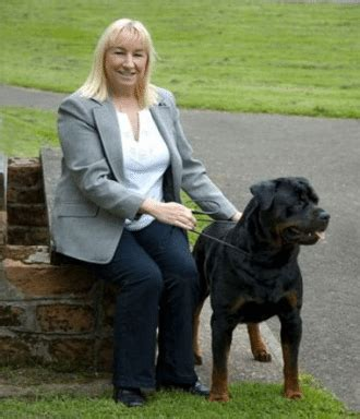 rottweiler breeders in scotland rottweiler breeders in great britain