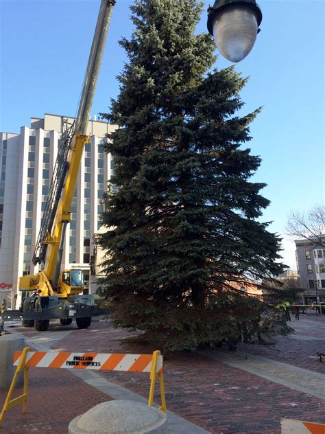 tree lighting closures congress partially closed for tree lighting the