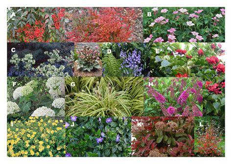 hang planten bloemen buiten de bloemetjes en planten buiten zetten graaf