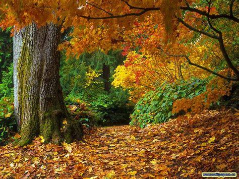 fall autumn lurve autumn annie sunshine