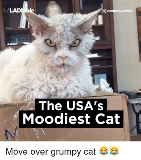 Dank Cat Memes - 25 best memes about grumpy cats grumpy cats memes