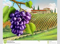 Vineyard Royalty Free Stock Photos - Image: 26735688 Free Vector Food Clipart