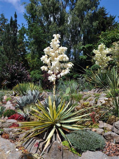 garten yucca teilen willkommen in meinem kleinen privaten quot botanischen garten