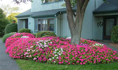 Low Maintenance Flower Garden Low Bed Ideas Low Maintenance Shrubs For Landscape Low Maintenance Flower Garden Garden Ideas